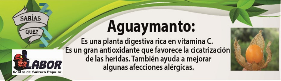 aguaymanto_5_de_setiembre.jpg