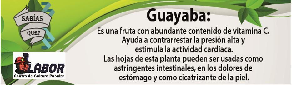 guayaba_30_de_agosto.jpg